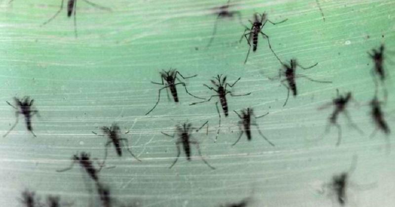 dengue01